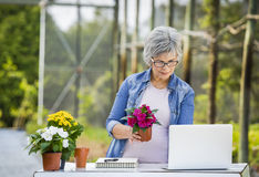 Working in a flower shop Royalty Free Stock Photos