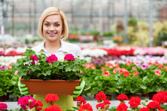 Working with flowers. Stock Image
