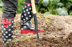Working in the garden. Close up photo of person working in the garden with a pitchfork Royalty Free Stock Photography