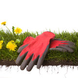 Working in the garden. Peace of grass with gardening-gloves isolated on white background Stock Photography