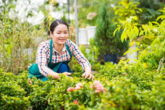 Working in the garden Stock Images