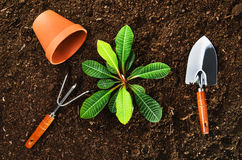 Working in the garden, planting a plant. Soil top view. Planting a beautiful, green leaved plant on a natural, sandy backgroud. Camera from above, top view royalty free stock photo