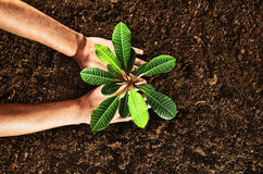 Working in the garden, planting a plant. Soil top view. Royalty Free Stock Image