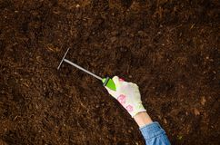 Working in the garden, planting a plant. Soil top view. Woman hand planting a plant on a natural, soil backgroud. Camera from above, top view. Natural Royalty Free Stock Photos