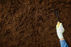 Working in the garden, planting a plant. Soil top view. Woman hand planting a plant on a natural, soil backgroud. Camera from above, top view. Natural Royalty Free Stock Photography