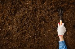 Working in the garden, planting a plant. Soil top view. stock images
