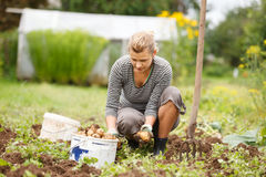 Working in garden Stock Images