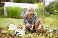 Working in garden Stock Images
