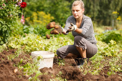 Working in garden Royalty Free Stock Photo
