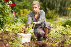 Working in garden Stock Photos