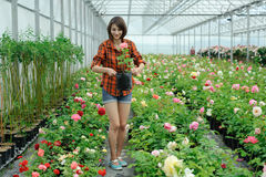 Working in a greenhouse Royalty Free Stock Photography