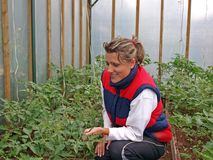 Working in greenhouse 3 Stock Photo