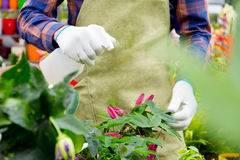 Working in the greenhouse Royalty Free Stock Photo