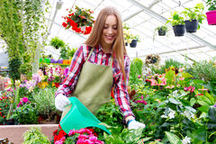 Working in the greenhouse Stock Photography