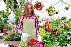 Working in the greenhouse Royalty Free Stock Images