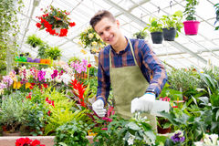 Working in the greenhouse Stock Photos