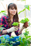 Working in greenhouse. Young woman holding salad seedlings in greenhouse. and smiling Stock Photography