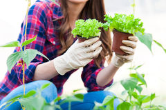 Working in greenhouse Royalty Free Stock Image