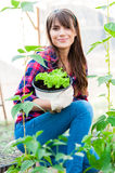 Working in greenhouse Royalty Free Stock Photography