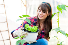 Working in greenhouse. Young woman holding salad seedlings in greenhouse. and smiling Stock Image