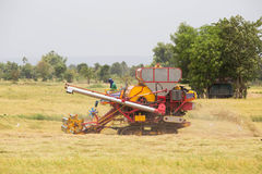 Working Harvesting Combine in the Field of rice Stock Photos