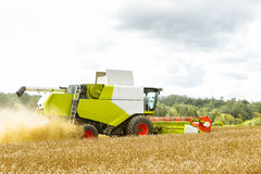 Working Harvesting Combine in the Field of Wheat.  stock images