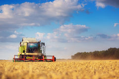 Working Harvesting Combine in the Field of Wheat Royalty Free Stock Image