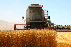 Working harvesting combine in the field of wheat Royalty Free Stock Photo