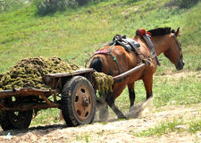 Working horse Stock Photo