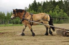 Free Working Horse Stock Photo - 25604950