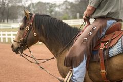 Working Horse. Quarter Horse stallion under western tack Royalty Free Stock Photography