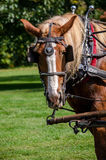 Working horse Royalty Free Stock Image