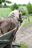 Working horse Royalty Free Stock Images