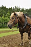 Working horse Royalty Free Stock Photography