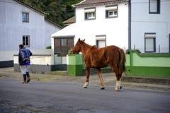 Working horse. Sete Cidades, Azores - November 30, 2013: Heading home after a long work day stock photos