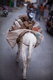 Working horse transporting bricks in India Royalty Free Stock Image