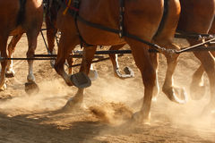 Working Horses. Draft horses hitched together running through a dusty field Stock Image