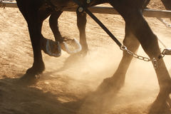 Working Horses. Close-up on the hooves of horses pulling a cart through a dusty field Royalty Free Stock Photos
