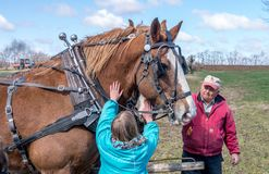 Working horses get some love. April 28 2018 Buchanan MI USA; plow days event showcases farmers with tractors and plow horses, and sometimes little girls have to Stock Image