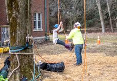 Working with kids in trees. New Carlisle Indiana USA , March 17, 2019; at this event During sugar camp days at Bendix woods county park, a tree worker helps a royalty free stock photography