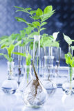 Working in a laboratory and plants stock photos