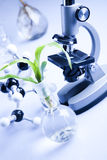 Working in a laboratory and plants Stock Images