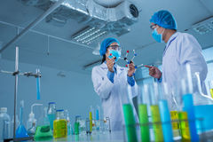 Working in laboratory Royalty Free Stock Photo
