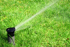 Working lawn sprinkler Stock Images