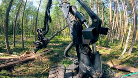 Working machine cuts trees in woods.