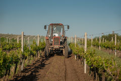 Working machines on the grape field agriculture Stock Photos