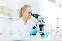Working with microscope Royalty Free Stock Image