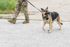 working military dog and trainer stock photography