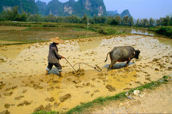 Working In A Paddy Field. Rice fields near Yangshuo in Guangxi Province, China Stock Photos