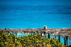 Man working on a shade for tourist in Cuba-Stock photos. This worker is contributing in building a paradise, somewhere on earth royalty free stock photography